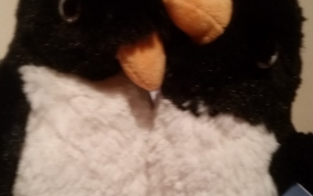 Monty and Mabel penguins up for adoption.. for Williams Fund!